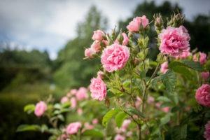 Tourisme Loiret Route de la Rose
